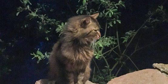 Zwierzęta domowe - kot